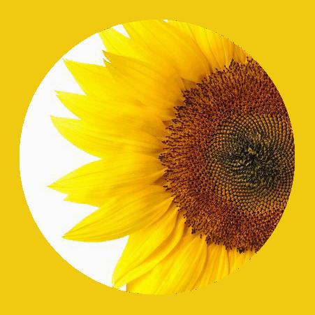Sunflower Creamer
