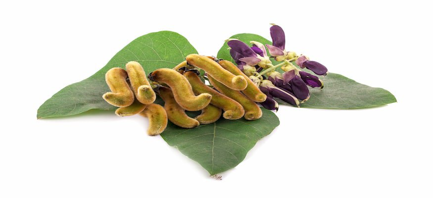 benefits of mucuna pruriens