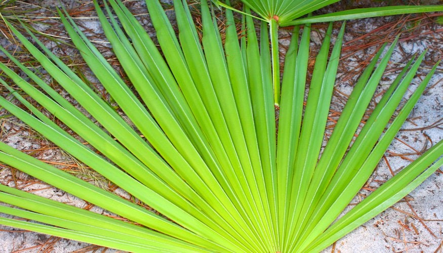 Saw Palmetto benefits for women